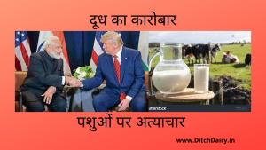 भारत में अमेरिकी डेयरी उत्पाद की बिक्री के क्या है मायने?
